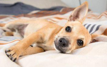 Dividindo apartamentos com cães